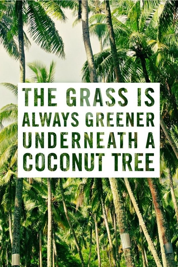 Travel Quotes | No coconut is complete without a straw and umbrella.