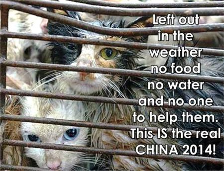 This is how CHINA'S Yulin Dog & Cat Meat Festival treats helpless cats. RT@irishfox1949  @saveallanimals2 #EVIL