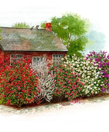 Fragrant Hedge | Trees and Shrubs from Spalding Bulb