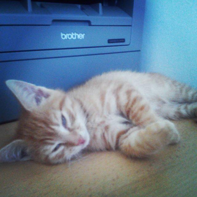 Praca wre z takim pomocnikiem :) #poniedziałek #hardwork #work #cat #rudy