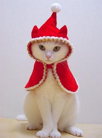 christmas cat. santa. elf. white and red. ears. (source?)