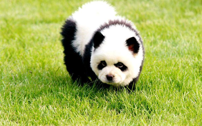 Scarica sfondi panda, 4k, simpatici animali, orso di peluche, animali divertenti