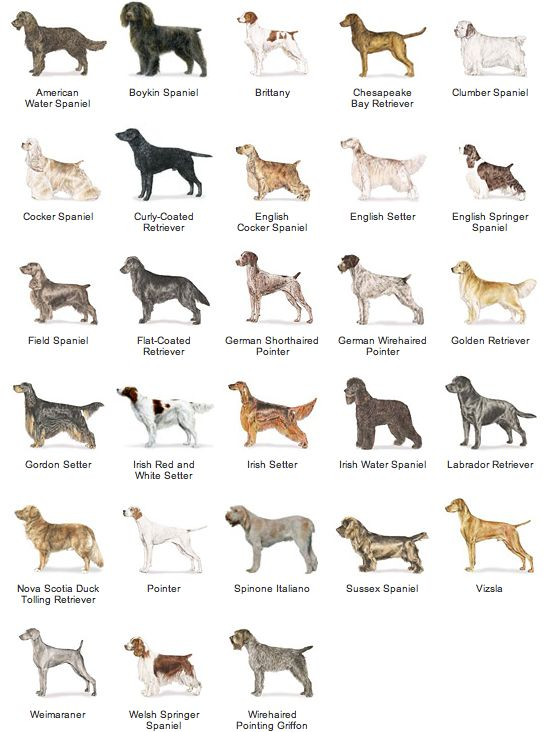 Groups Of Dogs Names
