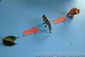 Using animal toys to illustrate the food chain. Perfect for kids who like to sort anyway (like mine).