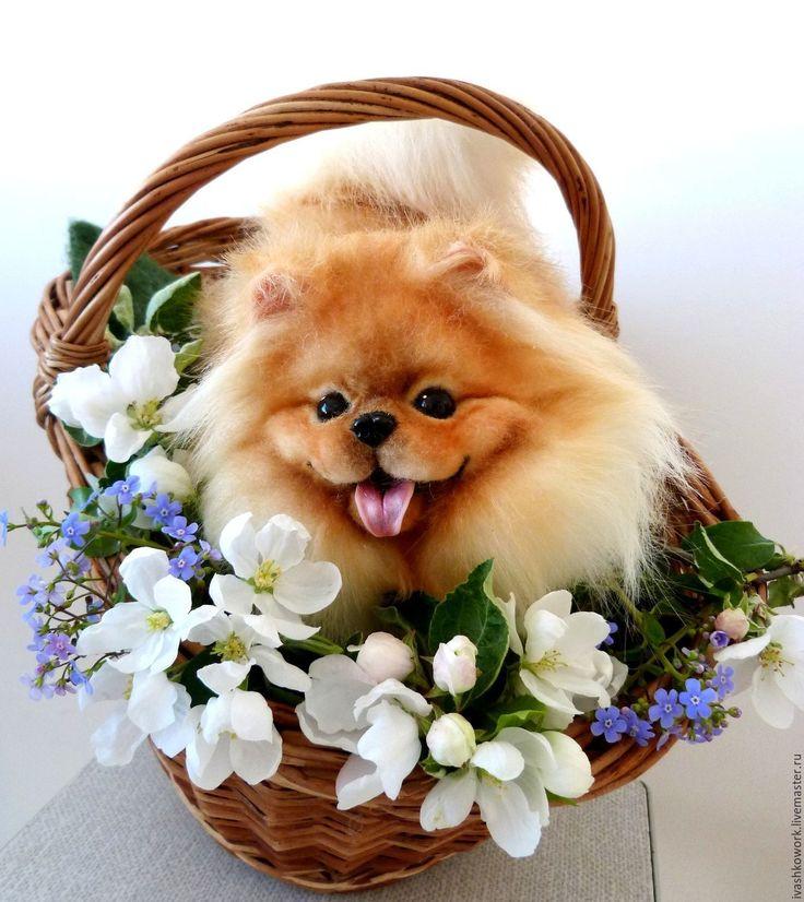 Открытка с днем рождения с собакой шпиц, открытки