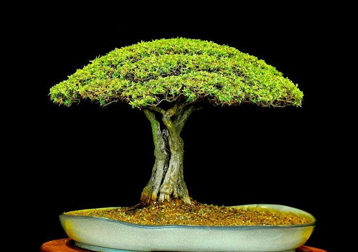 17 best images about bonsai terrariums on pinterest for Unusual bonsai creations