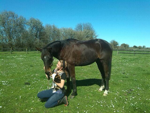 Equine Trader Vetpro Photo of the Week entrant - Alexandra Reed
