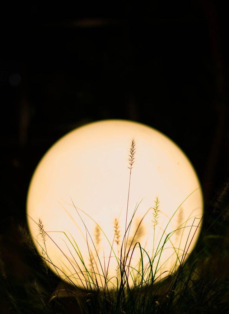 Harvest moon お月見の画像(写真). #japan