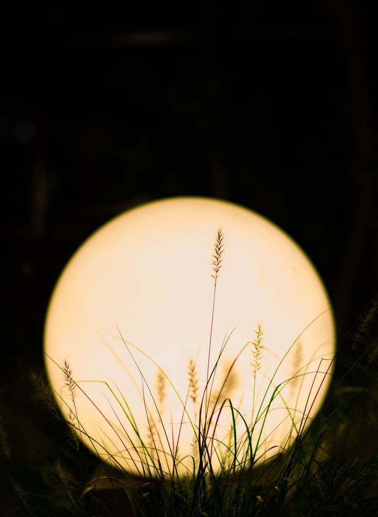 Harvest moon . #japan                                                                                                                                                                                 More