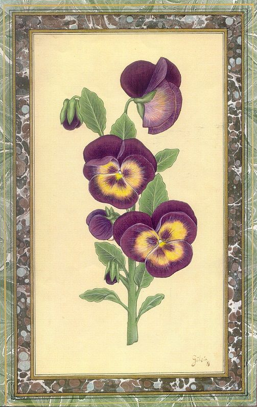 """Pansies"" by Gulcin Anmac."