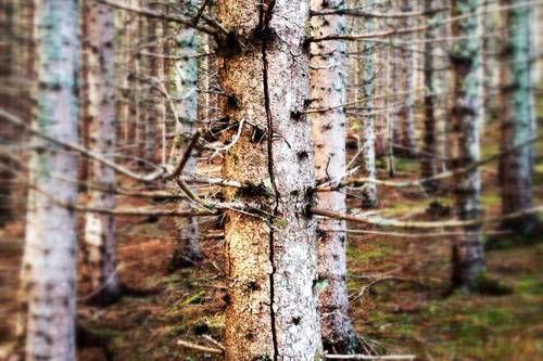 Kanskje du vil gå utenfor stien, og i stedet snike deg fram blant tette trær?