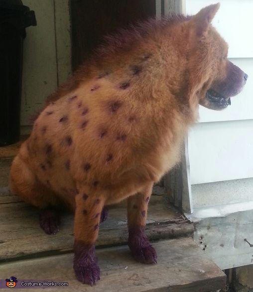 The 25+ best Dog spider costume ideas on Pinterest ...