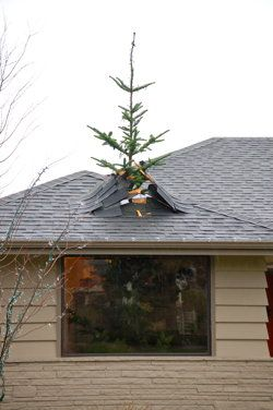 Christmas Trees Patrick O Brian And The Roof On Pinterest