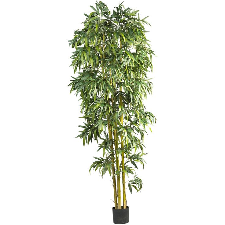 Bring the lush foliage of the tropics indoors! With thousands of luxurious leaves and standing a majestic eight feet tall; our Bamboo Tree is a dramatic replica of trees commonly grown in warmer climates. This tree will compliment any decorating style in your home or office (group several for a dramatic appeal!)