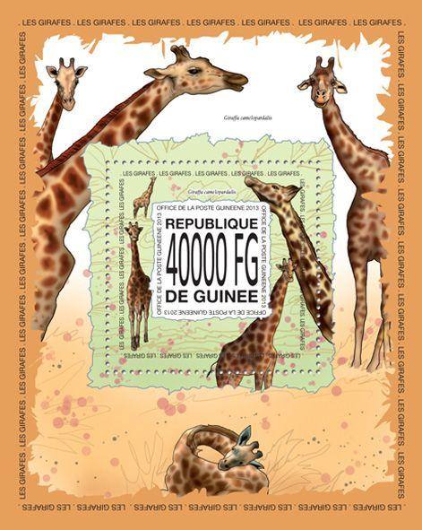 GU 13516 bGiraffes, (Giraffa camelopardalis).