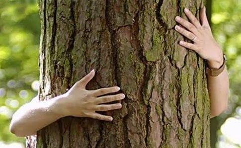 A fák gyógyító ereje