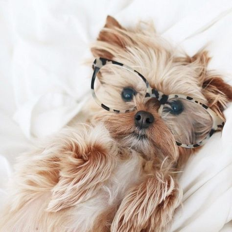 Check it out: https://itsayorkielife.com/do-my-glasses-make-me-look-smart-2/