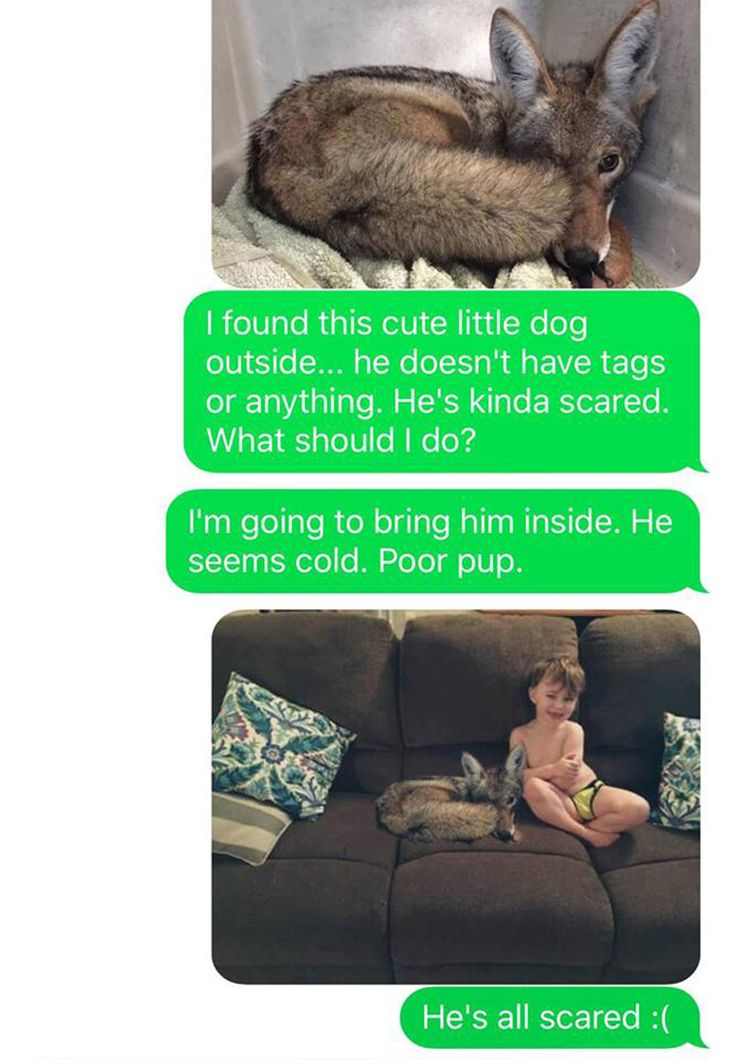 wife pranks husband coyote text messages