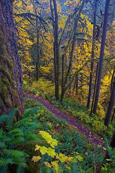 Wooded Trail in Silver Falls State Park, Oregon