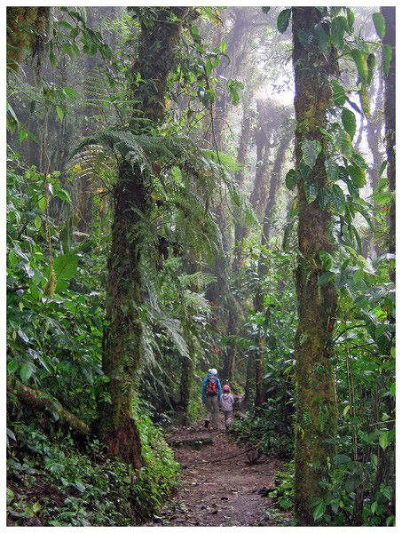 La canopée - Monteverde, Puntarenas Costa Rica
