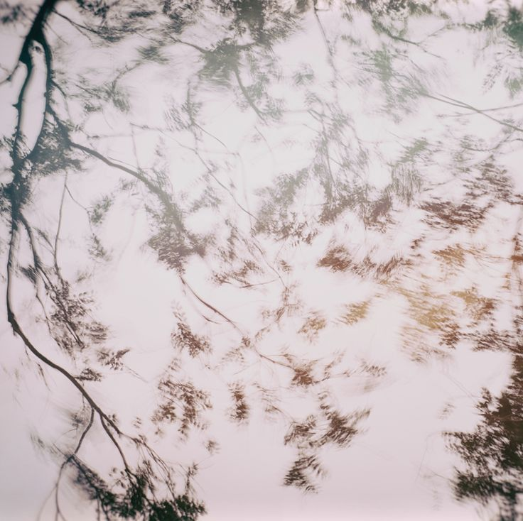 Photography | Alexandre Arnaoudov | Whispers In The Trees