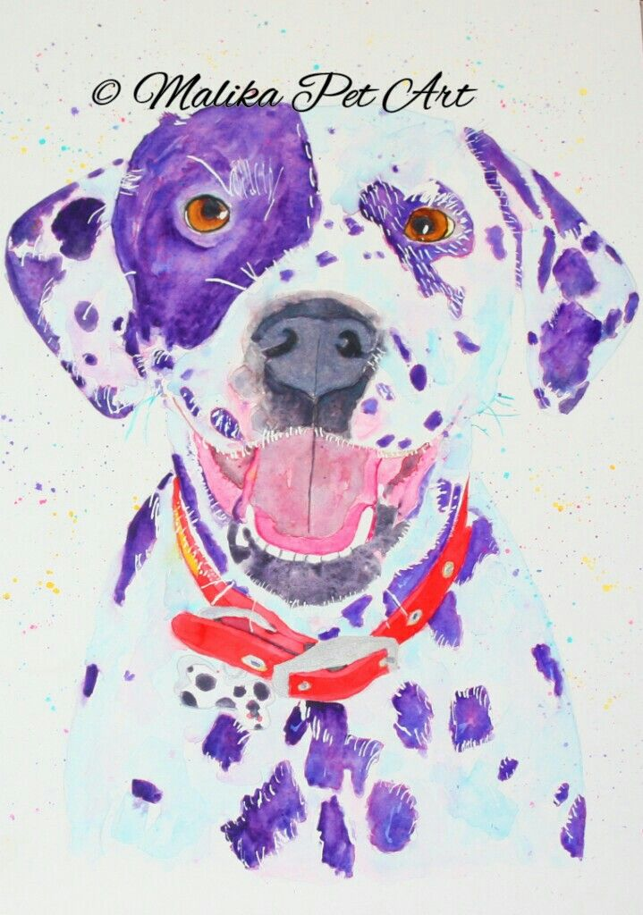 Lexi - watercolour painting of a beautiful dalmatian
