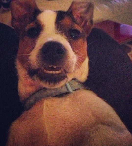 Here is Oscar's #petselfie! text DOGS to 70800 & donate £5 towards new kennels for @Battersea Dogs & Cats Home  #KennelAppeal