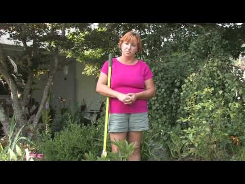Plant Care Tips : How to Grow Peony (Paeonia - Herbaceous)