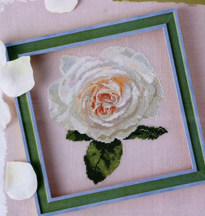Gallery.ru / Фото #5 - Rose ivory - ORANGE-POINT