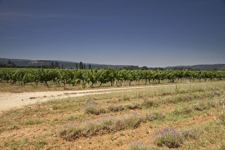 Nous avons pris de l'altitude à Beaume de Venise (Suzette) chez Guy Julien qui nous a fait visiter sa Ferme Saint Martin. Le panorama est à couper le souffle !  Et pour finir: visite du Chateau des Eydins, situé en plein coeur du Parc Naturel Régional du Luberon, avec Serge Seignon producteur de vin biologique.  Ainsi s'achève notre voyage dans le Vaucluse, de belles rencontres et découvertes ont marqué nos quelques jours auprès des viticulteurs et de leurs vignobles.