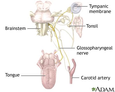 Nerve branches Glossopharyngeal Nerve
