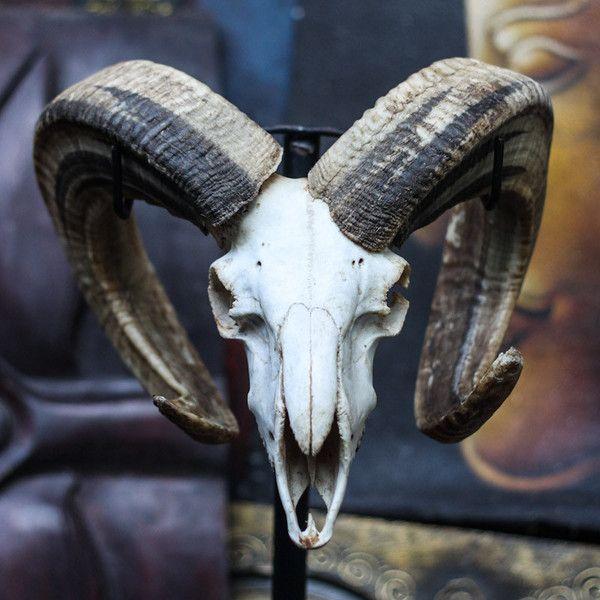 Ram Skull - Plain