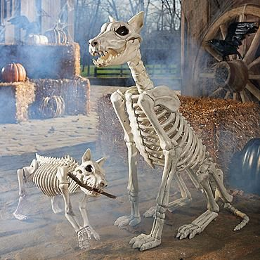 sparky the skeleton dog on leash