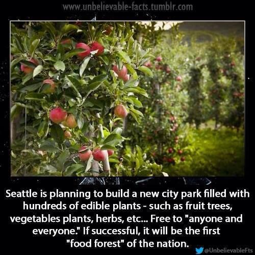 Seattle:   First Food Forest of the Nation (Thank you Kong Wai and Catalyzing Change for sharing this this!)  Super foods: bit .ly / 1a4taVl  bit . ly / 1a25T6p