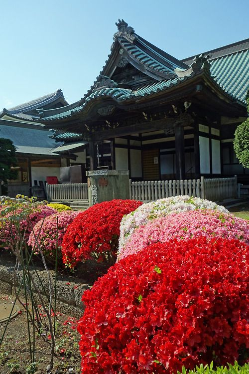flowers and temple in Fujisawa
