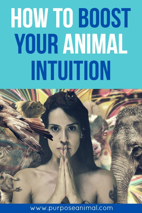 HOW TO BOOST YOUR ANIMAL INTUITION:  Want to know the very first thing I recommend to start boosting your spiritual confidence with animals?   Oracle Cards   So what are oracle cards? Oracle cards are normally a deck of around 40 different cards that represent a different theme, animal, or area. Each card has a word, a short message, and a beautiful picture. They are a way to receive guidance in a loving way that is very much about what you are currently experiencing.   The idea behind…
