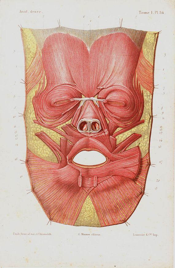 Antique anatomy prints