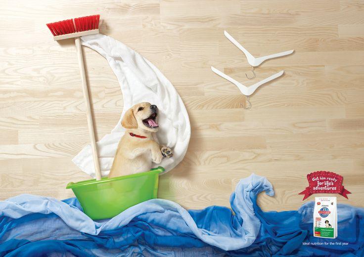 Morir de amor con esta campaña de una marca de comida para perros y gatos <3: Animals, Adventure, Life, Dogs, Pet, Art, Puppys, Kittens