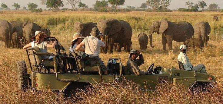 Safári pelo Kruger Park