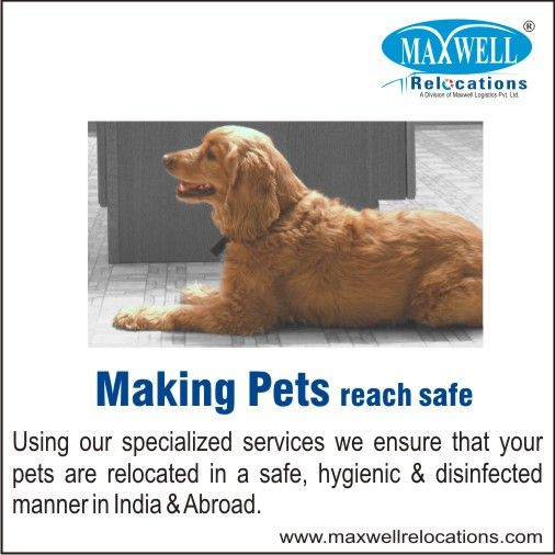 Making Pet Reach Safe - Maxwell Relocations is one the best domestic and international Pet Relocation Services Provider. Know more visit:www.maxwellrelocations.com/pet-relocation/ #petrelocation #maxwellrelocations