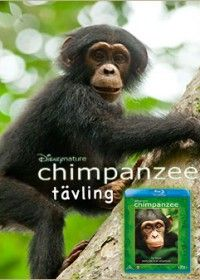 Chimpanzee tävling - Vinn Disney Natures Chimpanzee på Bluray!