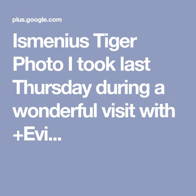 Ismenius Tiger Photo I took last Thursday during a wonderful visit with +Evi...