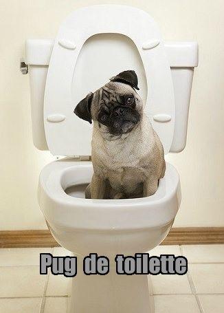 How Do I Toilet Train My Dog