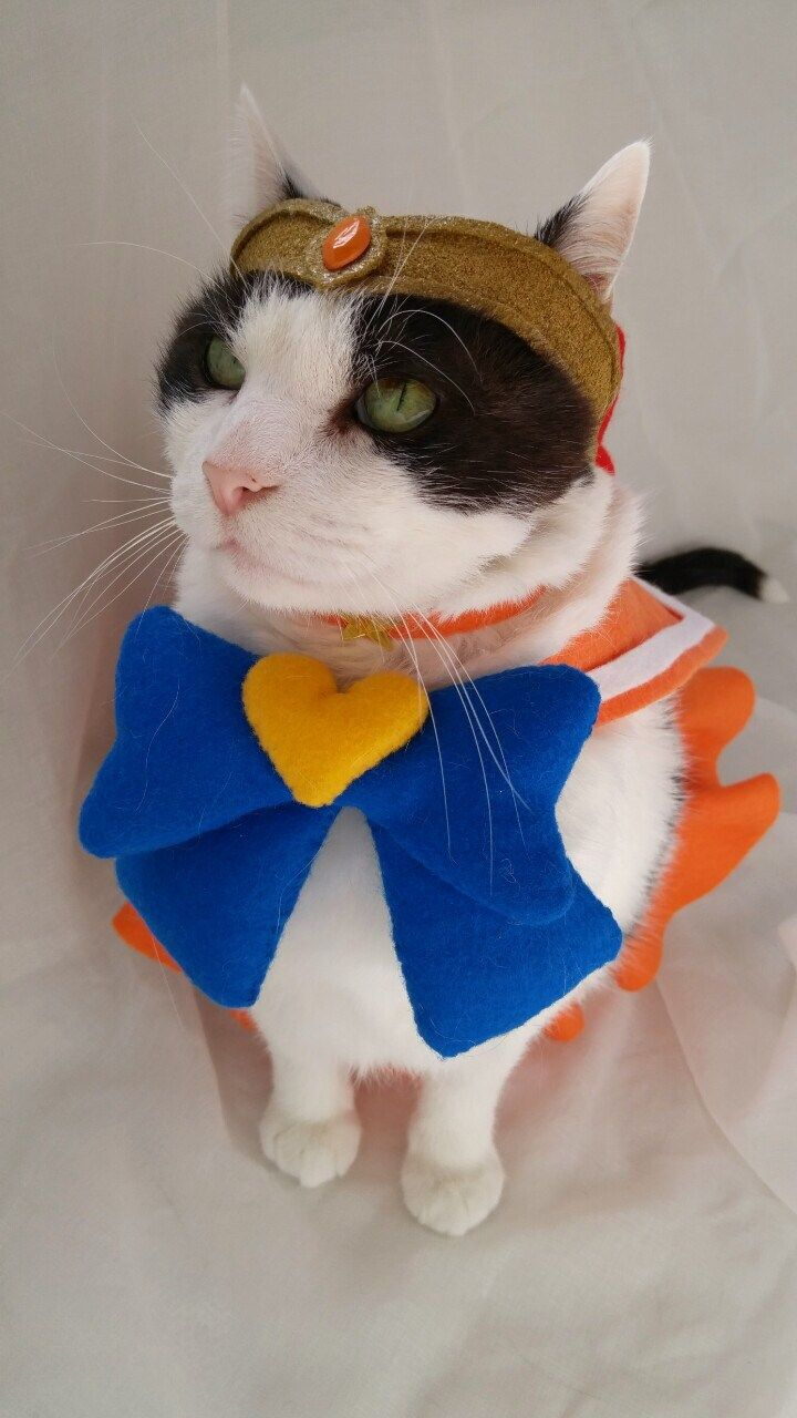 top 20 cat & dog costumes - sailor moon | cats in clothes