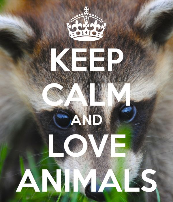 Love Animal Quotes: 17 Best Calm Quotes On Pinterest