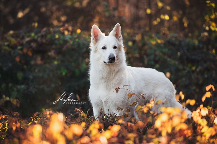 HAFNER FOTOGRAFIE Pferde- und Hundebilder www.hafnerphotogr …