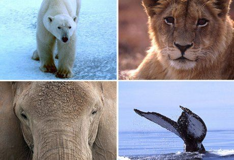 PLEASE SIGHN & SHARE!! Take action. A Call for U.S. Climate Action .@IFAW
