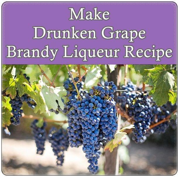 Make Drunken Grape Brandy Liqueur Recipe Homesteading  - The Homestead Survival .Com
