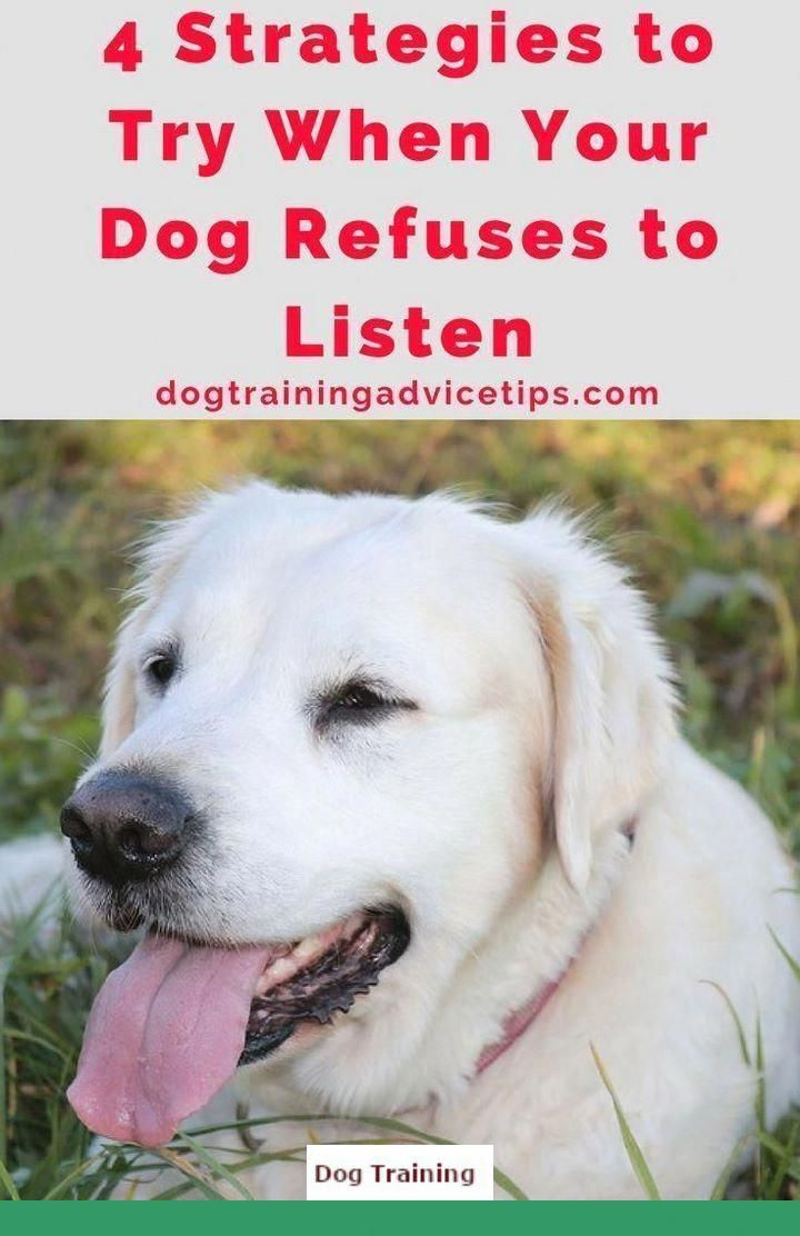 1 Dog Obedience Training Boarding And Old Dog New Tricks Lyrics
