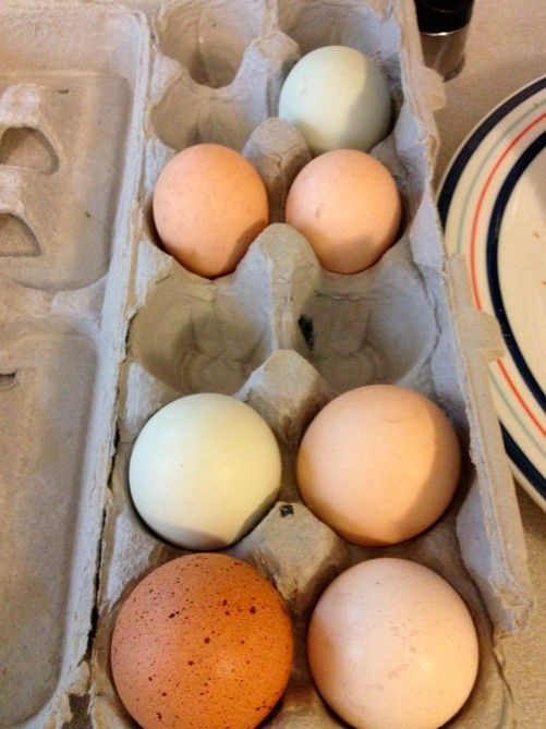 all the colors of the egg rainbow... from my Freedom Food Farm CSA!